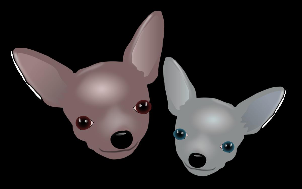 Chihuahua,Paw,Carnivoran