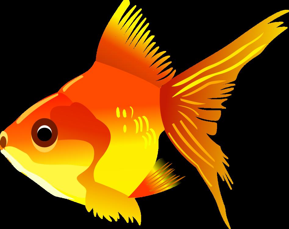 Marine Biology,Organism,Fish