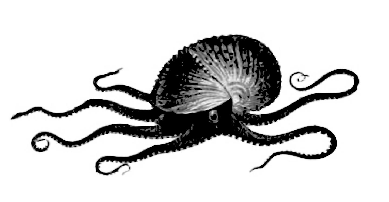 Marine Invertebrates,Organism,Pollinator