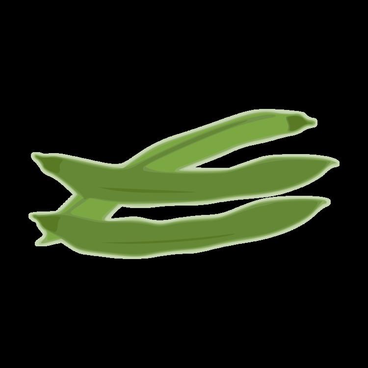 Grass,Leaf,Green