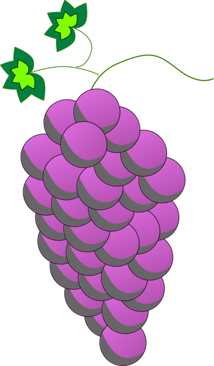 Plant,Grape,Grapevine Family