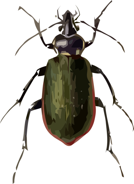 Rhinoceros Beetle,Weevil,Invertebrate