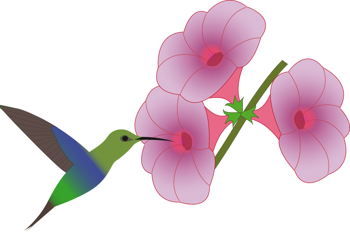Hummingbird With Flowers Drawing Flowers Healthy