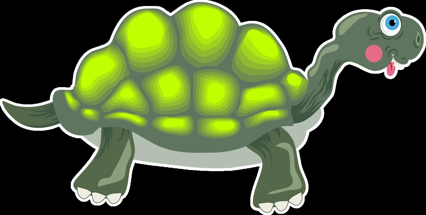 Turtle,Reptile,Tortoise