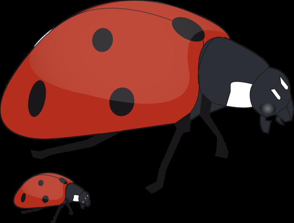 Ladybird,Invertebrate,Snout