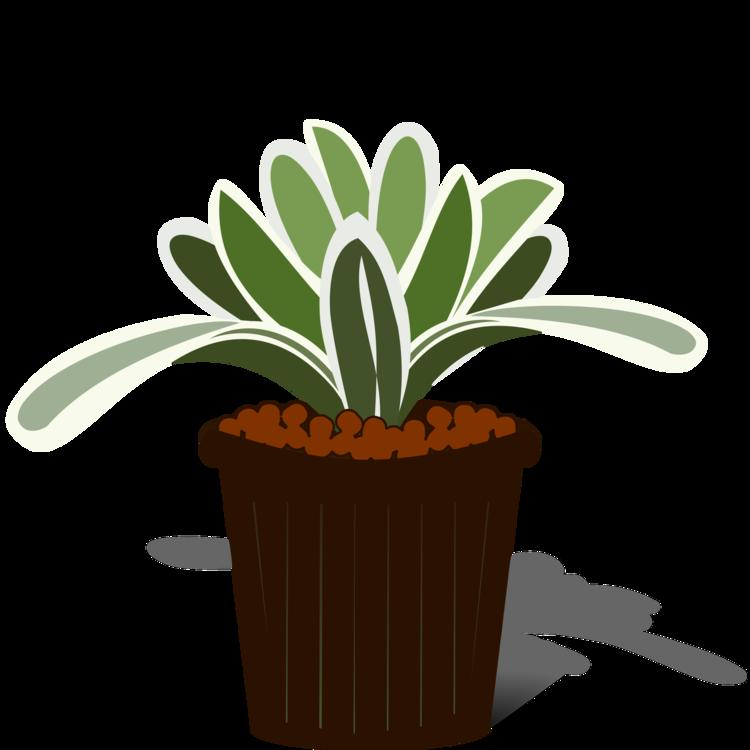Plant,Flowerpot,Tree