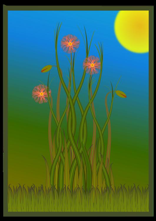 Grass Family,Flower,Meadow