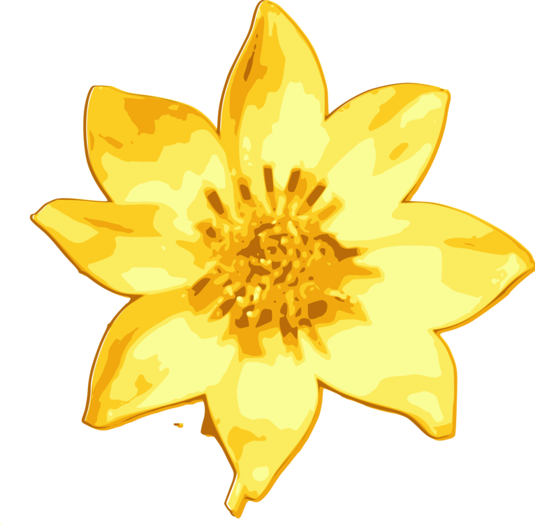Plant,Flora,Sunflower
