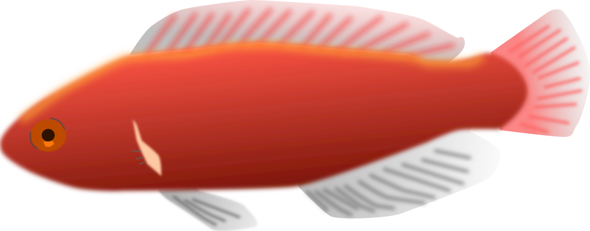 Close Up,Fish,Orange