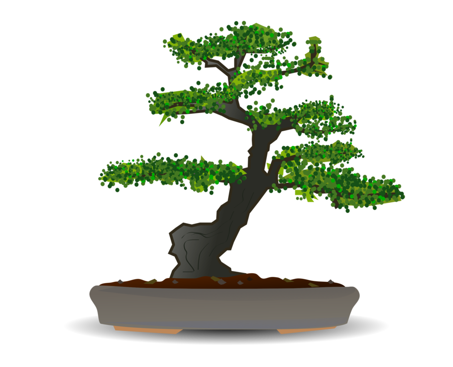 Bonsai,Plant,Houseplant