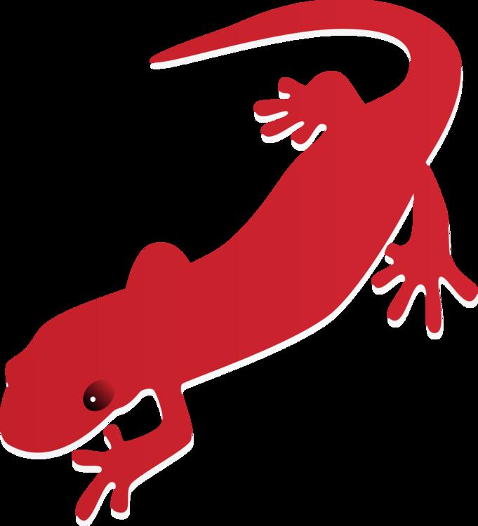 fire salamander newt drawing tiger salamander free commercial rh kisscc0 com newt clipart free new clipart software
