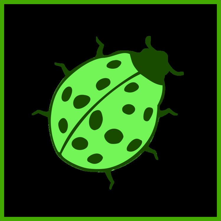 Leaf,Food,Ladybird