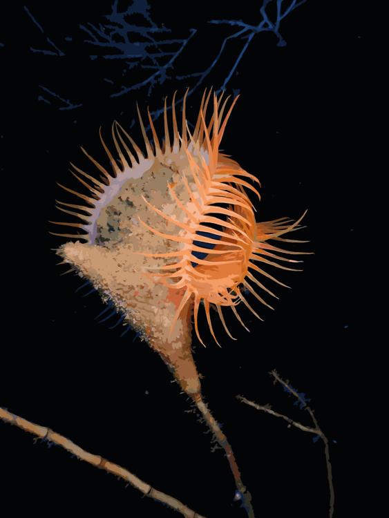 Marine Biology,Fish,Organism