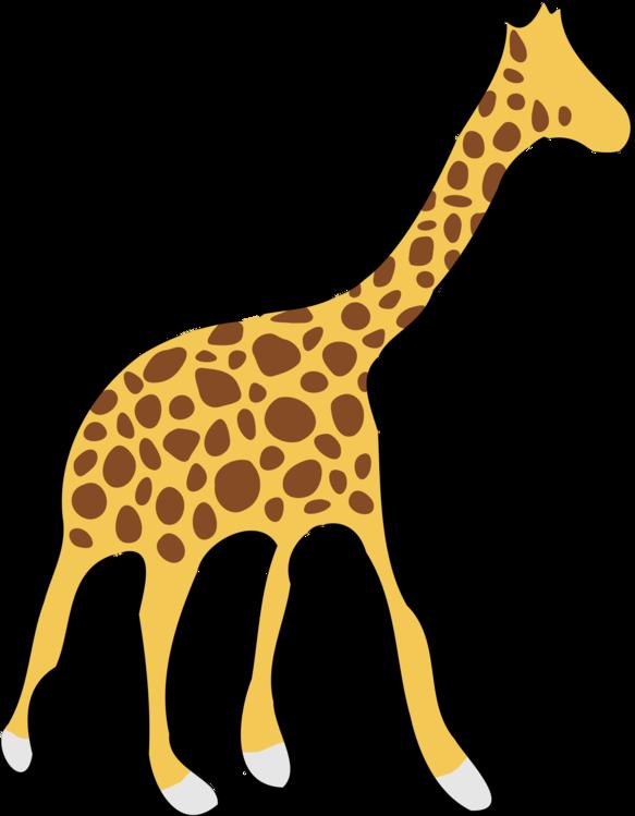 Giraffidae,Wildlife,Neck