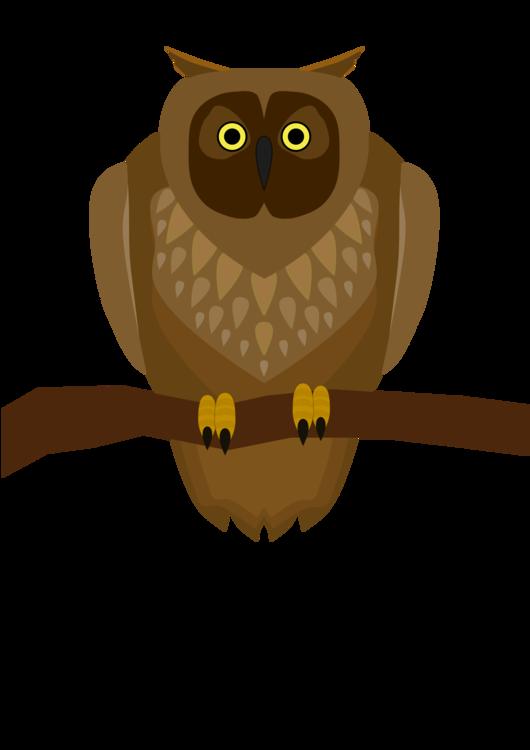 Bird Of Prey,Owl,Bird