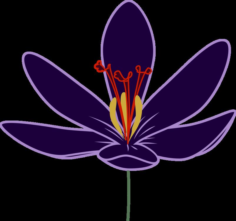 Plant,Flower,Purple