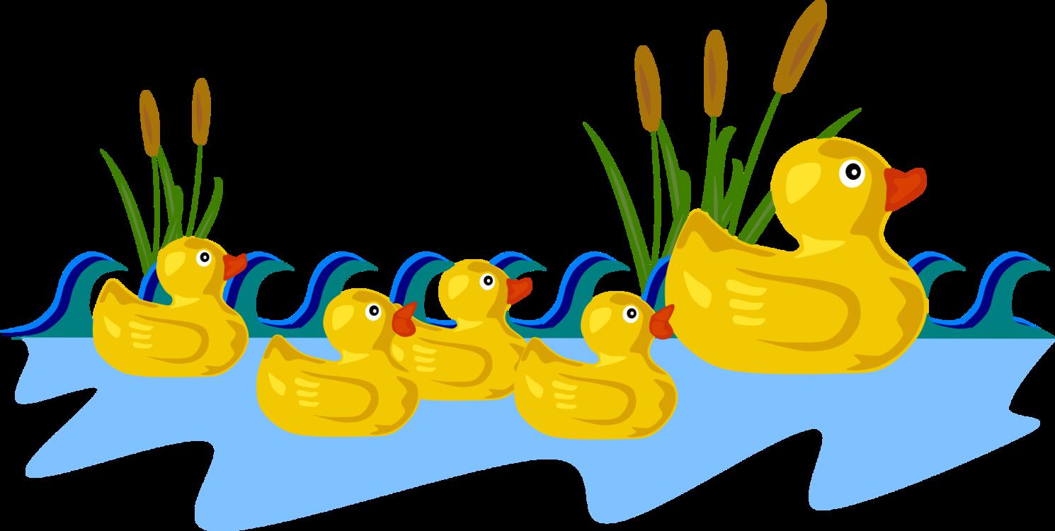Poultry,Water Bird,Livestock
