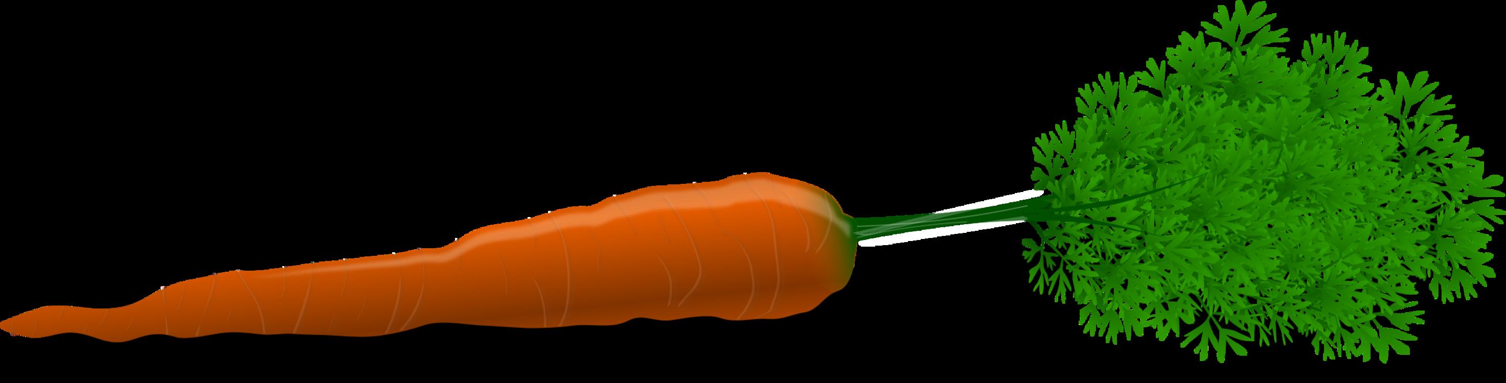 Plant Stem,Carrot,Vegetable