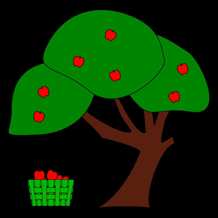 Plant,Tree Frog,Leaf