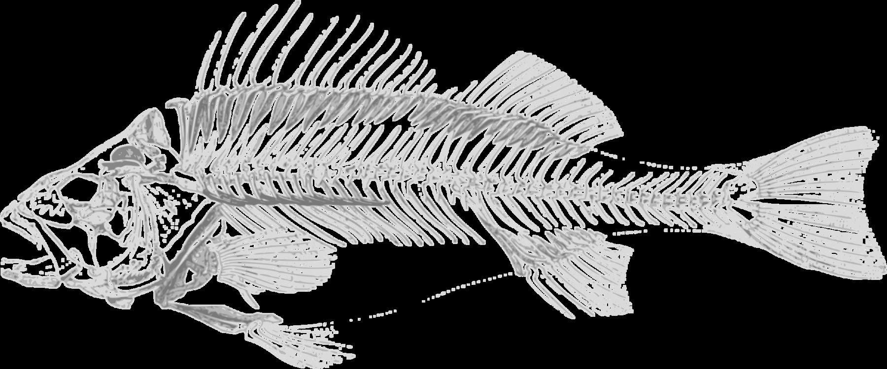 Perch,Line Art,Fish