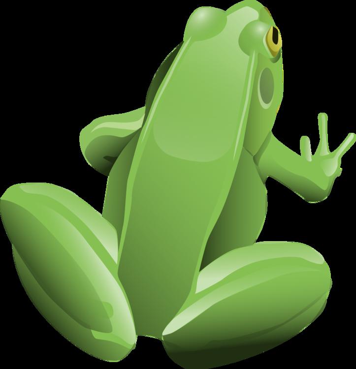 Toad,Vertebrate,Frog