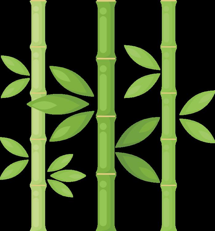 Angle,Grass Family,Plant Stem