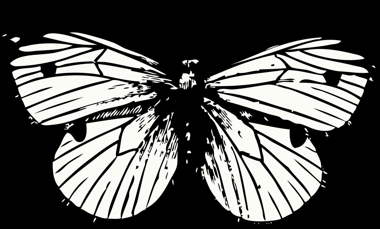Symmetry,Moth,Moths And Butterflies