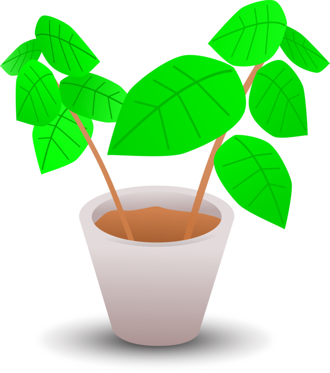 Plant,Leaf,Cup