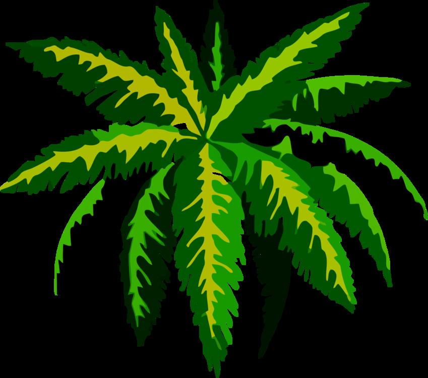 Tree,Plant,Leaf