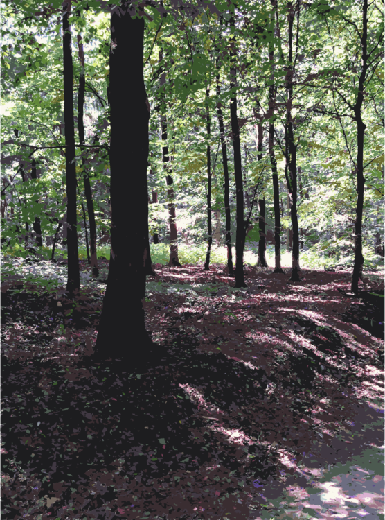 Biome,Northern Hardwood Forest Concept,Temperate Broadleaf And Mixed Forest
