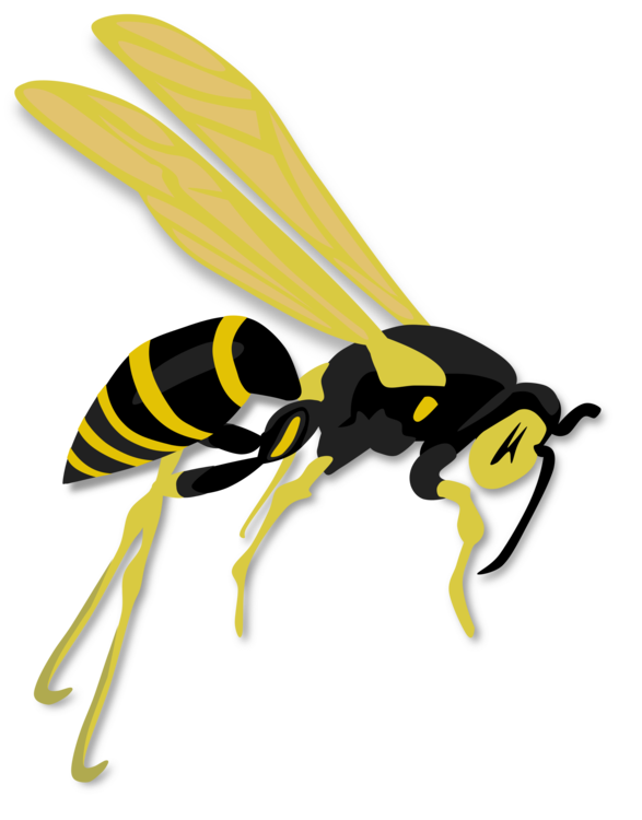 hornet western honey bee wasp insect free commercial clipart rh kisscc0 com Baseball Stadium Clip Art First Aid Clip Art