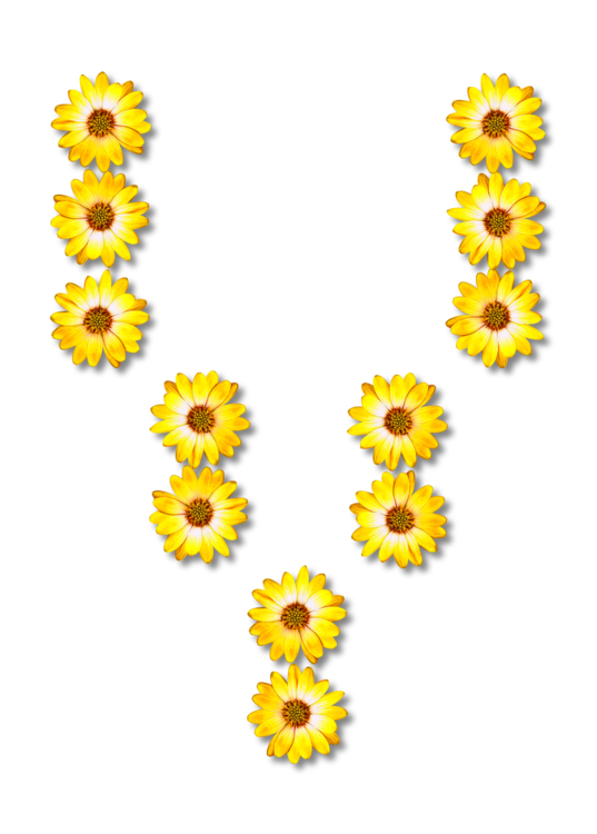 Sunflower Seed,Plant,Flower
