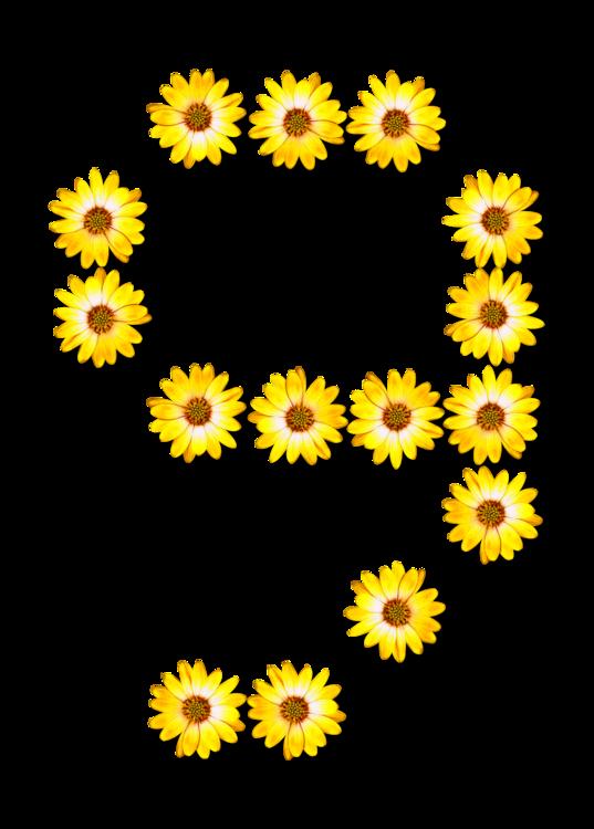 Sunflower Seed,Chrysanths,Flower