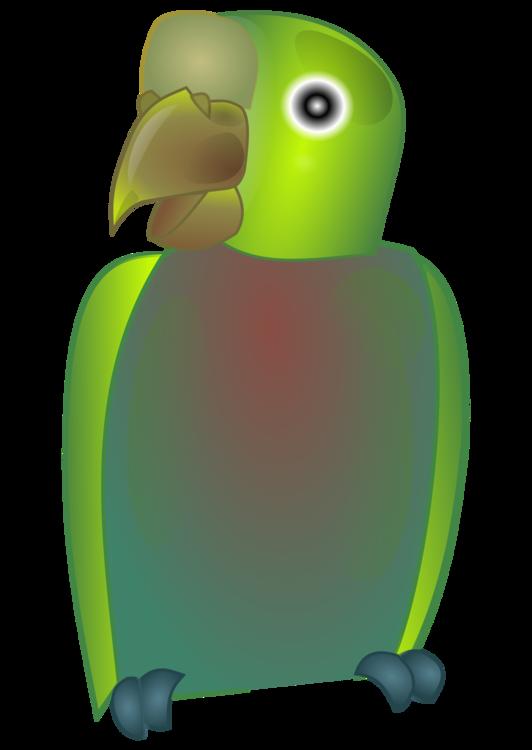 Flightless Bird,Parrot,Vertebrate