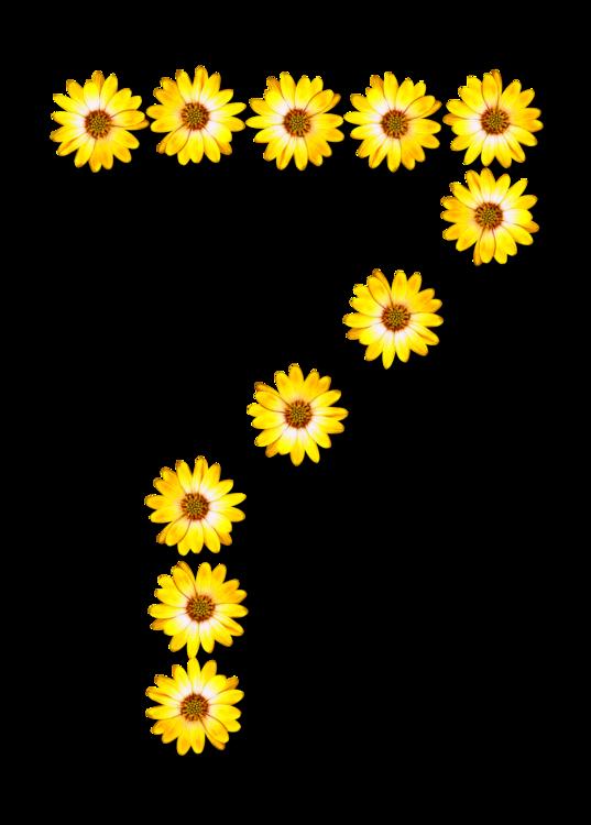 Sunflower Seed,Plant,Flower