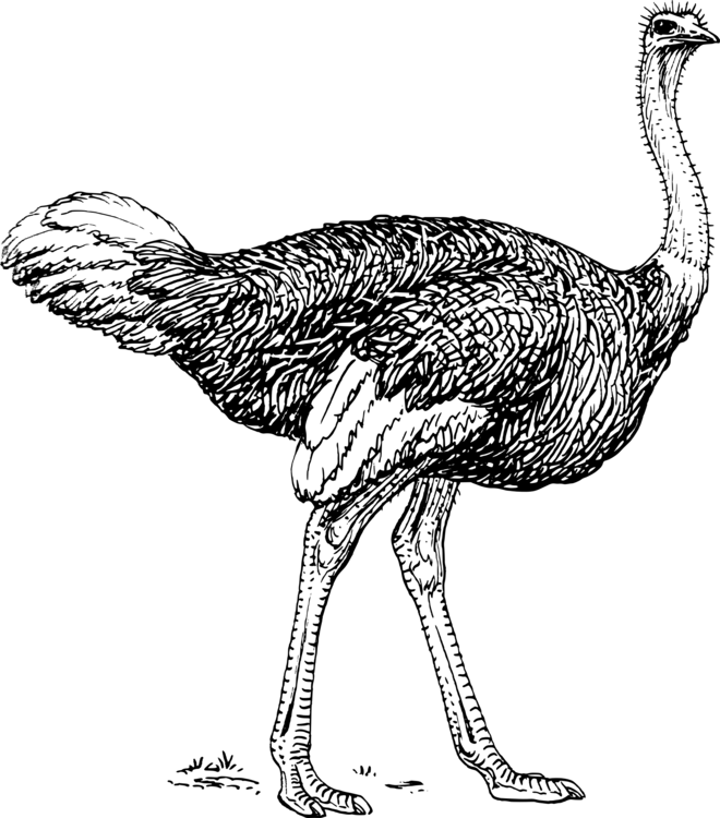 Fowl,Galliformes,Monochrome