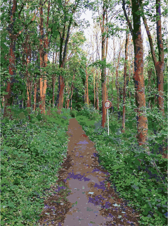 Northern Hardwood Forest Concept,Temperate Broadleaf And Mixed Forest,Old Growth Forest
