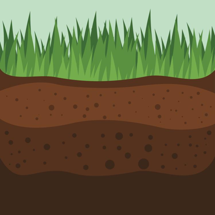 Plant,Meadow,Ecosystem