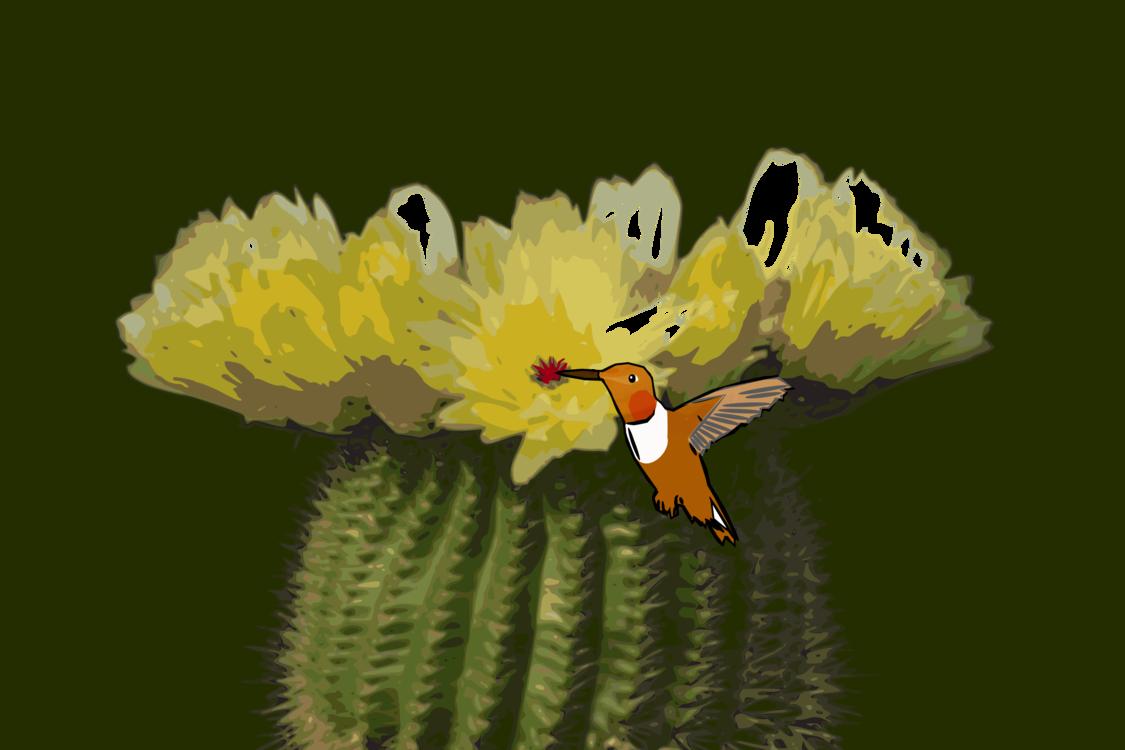 Petal,Flora,Nectar
