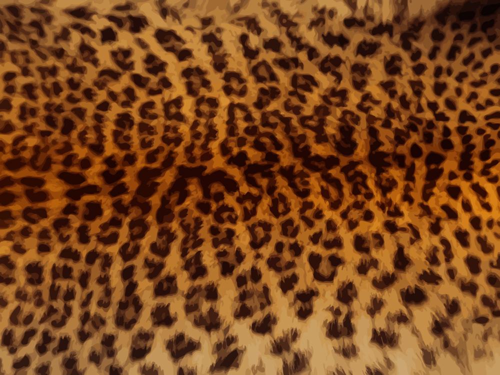 Cheetah,Wildlife,Jaguar