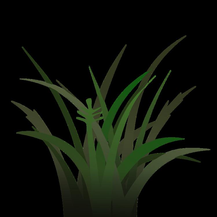 Plant,Leaf,Aloe