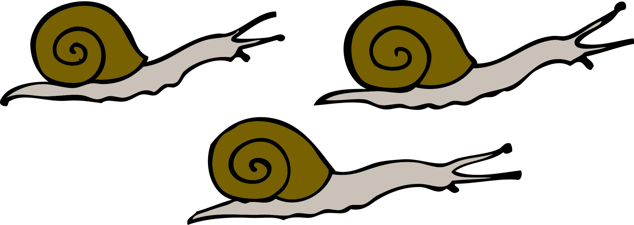 Snail,Artwork,Pollinator