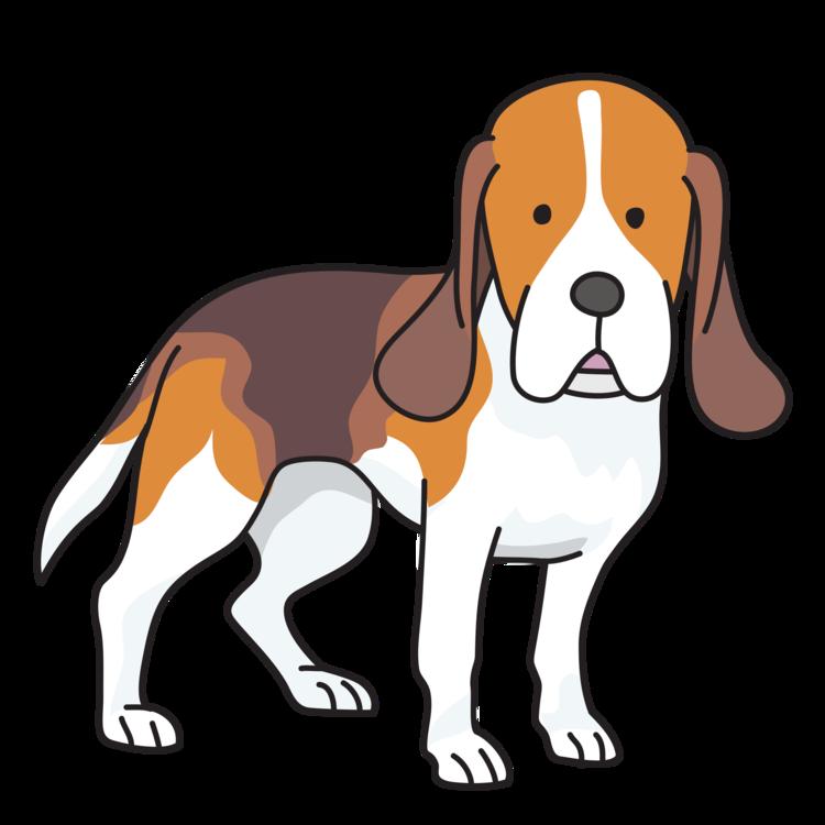 Snout,English Foxhound,Hound