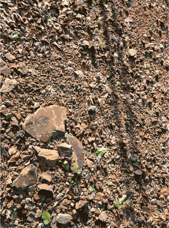 Plant,Gravel,Geology