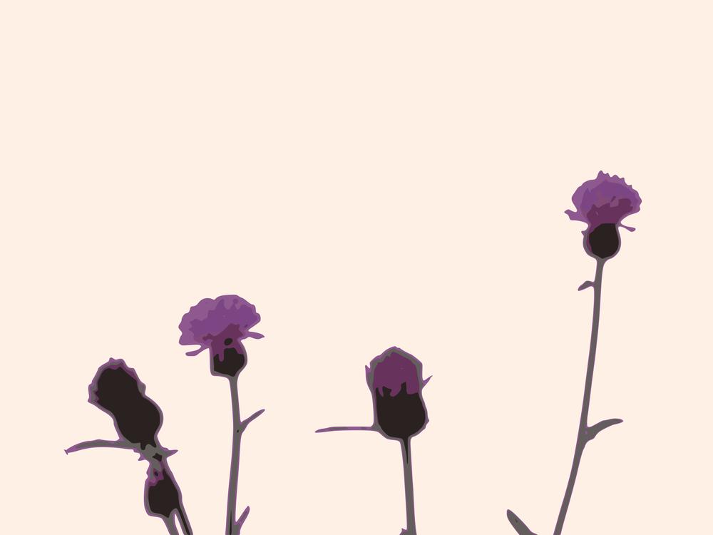 Computer Wallpaper,Plant,Flora