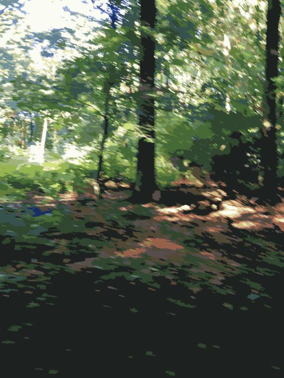 Biome,Sunlight,Leaf