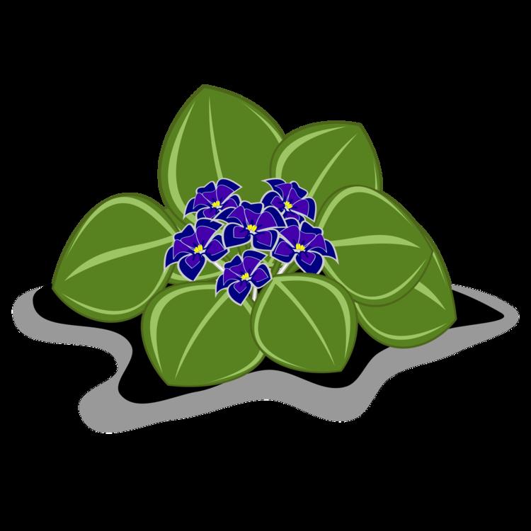 Flora,Leaf,Plant