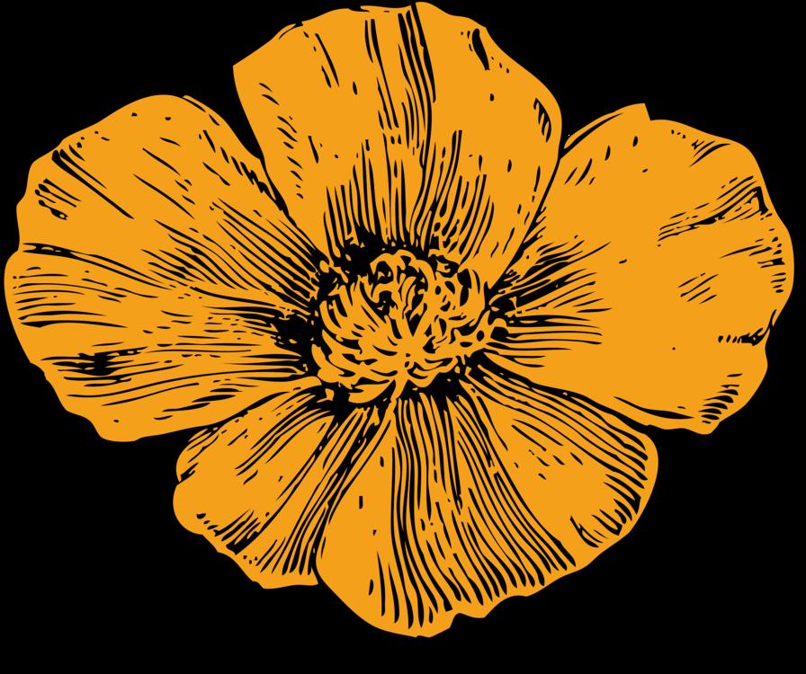California Poppy Drawing Plants