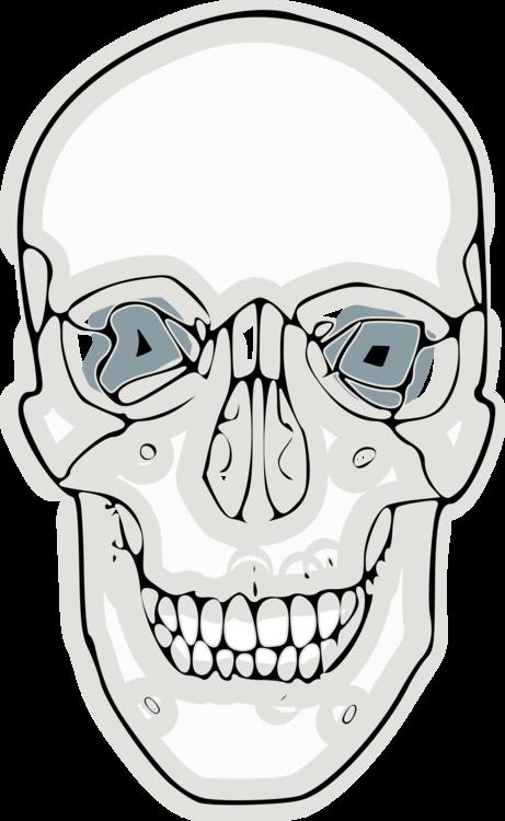 Line Art,Head,Skull