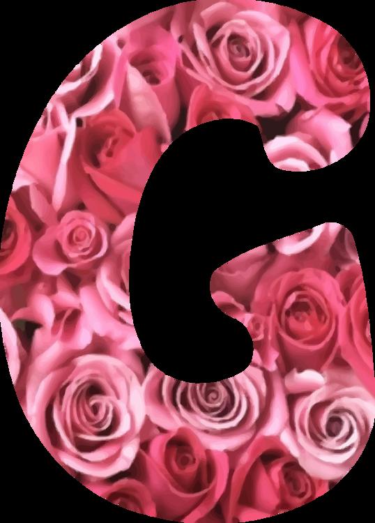 Pink,Flower,Garden Roses